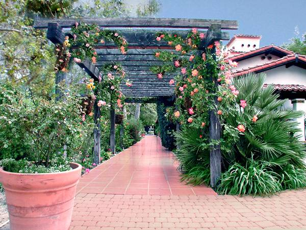 Trellis-Roses.jpg