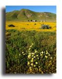 Ranch, wildflowers