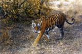 wildlife_india