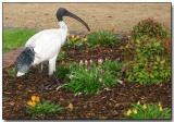 Park Ibis, The Rocks section of Sydney Cove