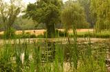 Pond with cattails 0517.jpg
