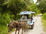 Gili Trawangan transport