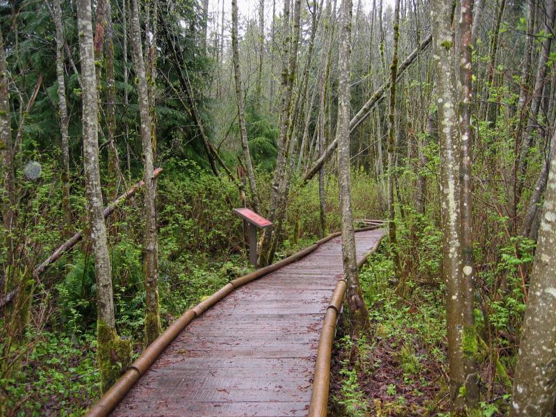 Swamp Trail Boardwalk