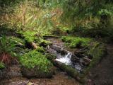 Creek on TMT