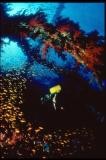 Beneath the Red Sea and Indian Ocean