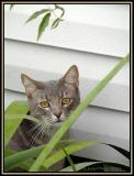 Roxannes Kitty.5812