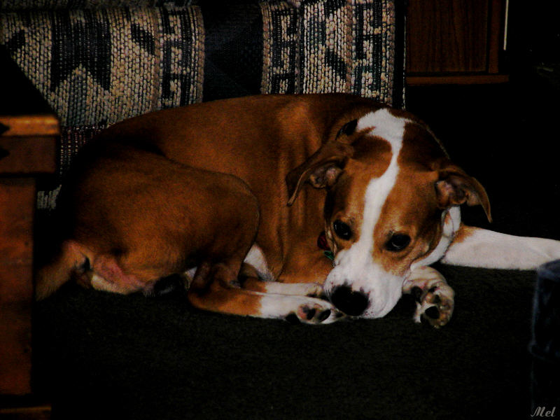 Lucky Dog.jpg (9/16/04)(288)