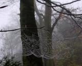 Autumnal web