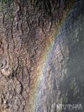 arco iris sobre corteza