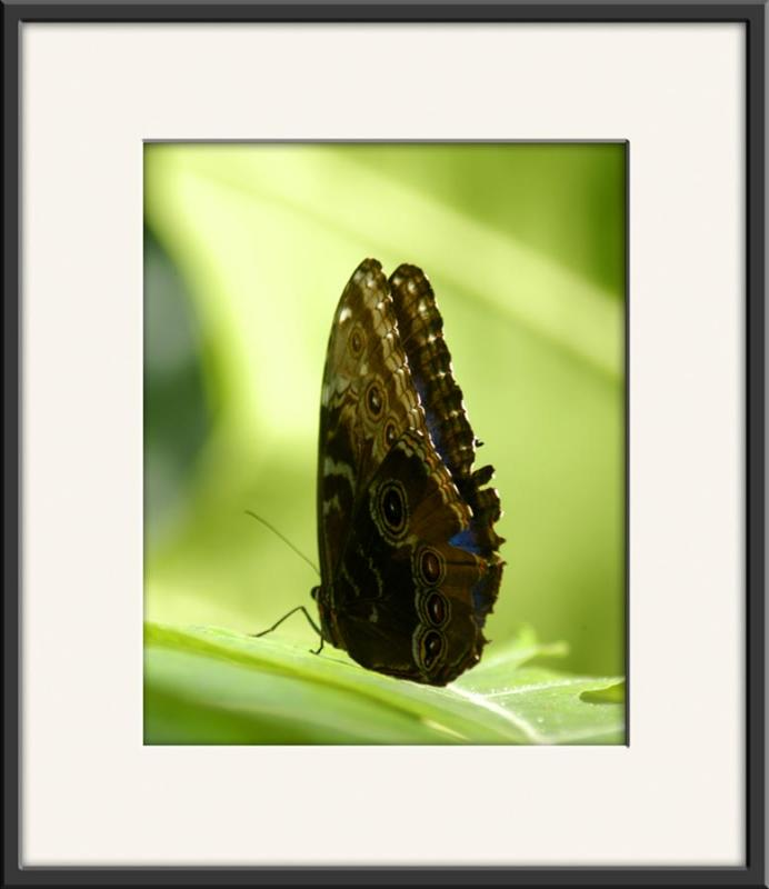 Butterfly_0664.jpg