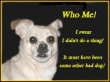 Who Me?.jpg