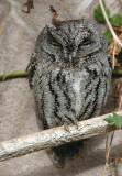 SW OWLS`