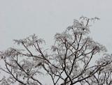 2005-03-12: White on White