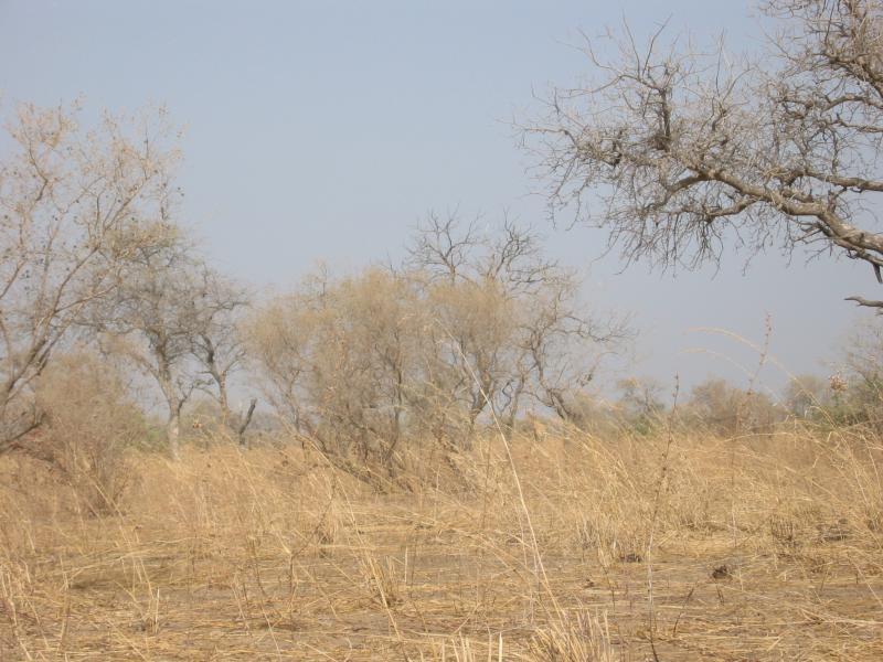 Spot the giraffe 1