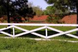 Field of Paintbrush - La Vernia