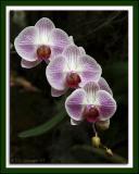 Orchids 2005