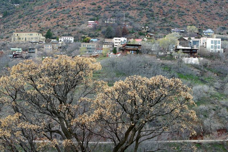 Jerome (old mining town undergoing revival)