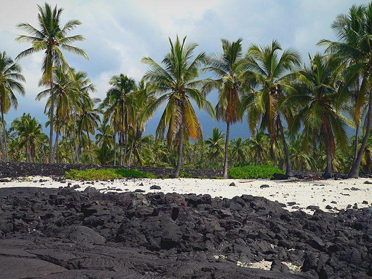 Puna Shoreline