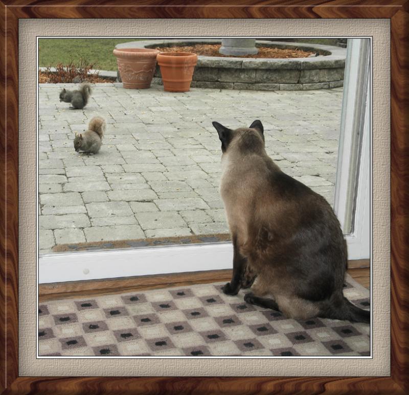 looking at squirrels.jpg