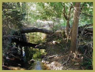 Sturt Creek from the footbridge.