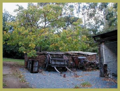 Walnut tree and ancient equipment