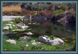 A still water pond