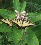 butterfly 380