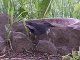my first cat bird