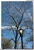 Central Park_564857.jpg