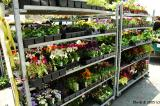 Cart of Flower_193