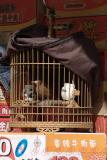 063 - Bird II