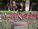 The little cannon of the Palais Royal
