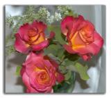MAY 18- TRIPLE ROSES
