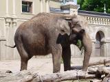 elephant1322.JPG