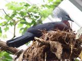 bird1407.JPG