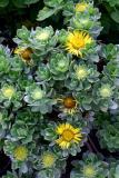 Getty Flowers 6