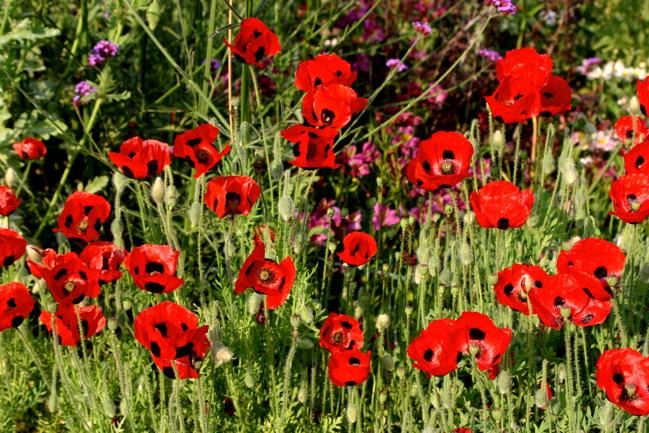 Getty Flowers