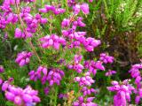 Bell Heather Close