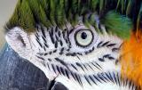 macaw eye
