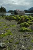 Tofino Harbour 8