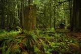 Rainforest - Outhouse