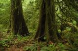 Rainforest 43