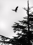 Eagle 735
