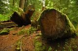 Rainforest 83