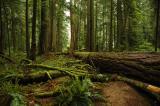 rainforest 6.jpg