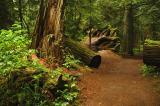 Rainforest 93