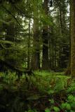 Rainforest 19