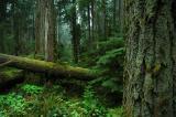 rainforest 2.jpg