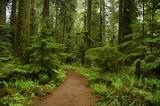 Rainforest 49