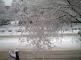 Snow March 03